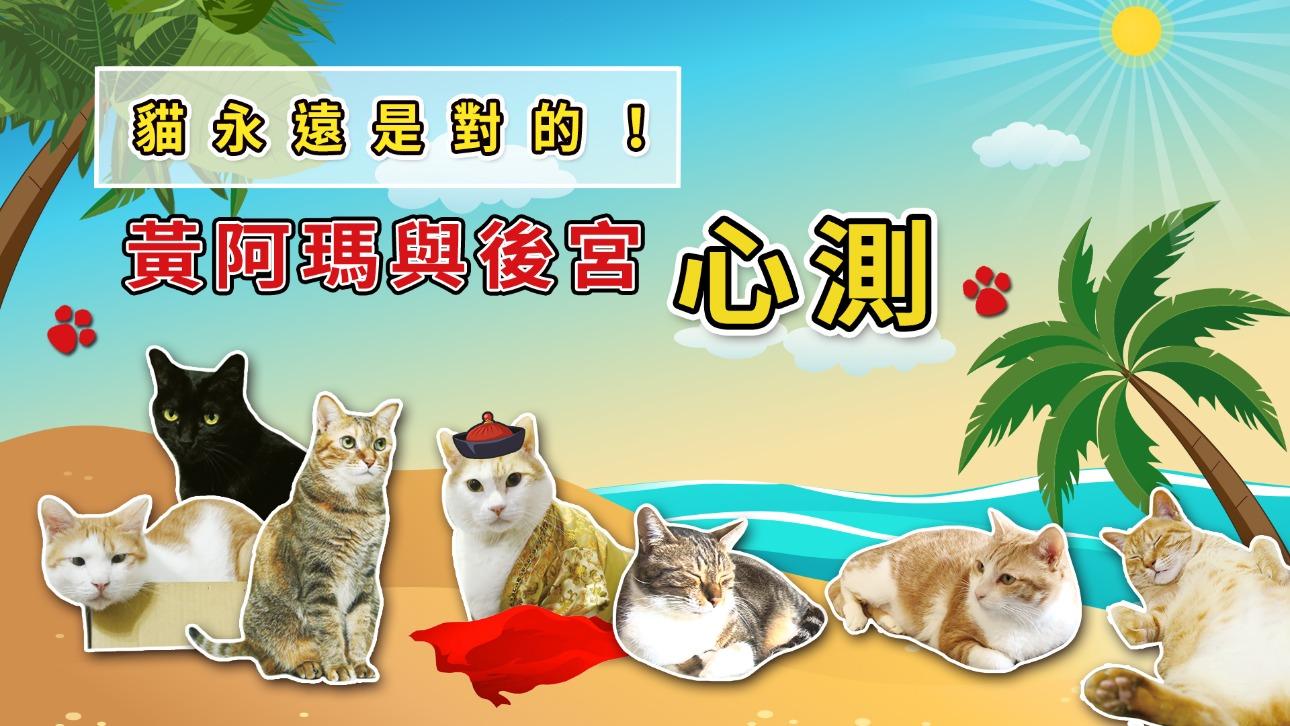 貓永遠是對的!讓黃阿瑪與後宮幫你測出別人都是怎麼看你的?